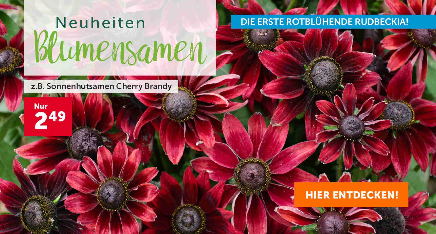 +++ (3) Blumensamen +++ - 3