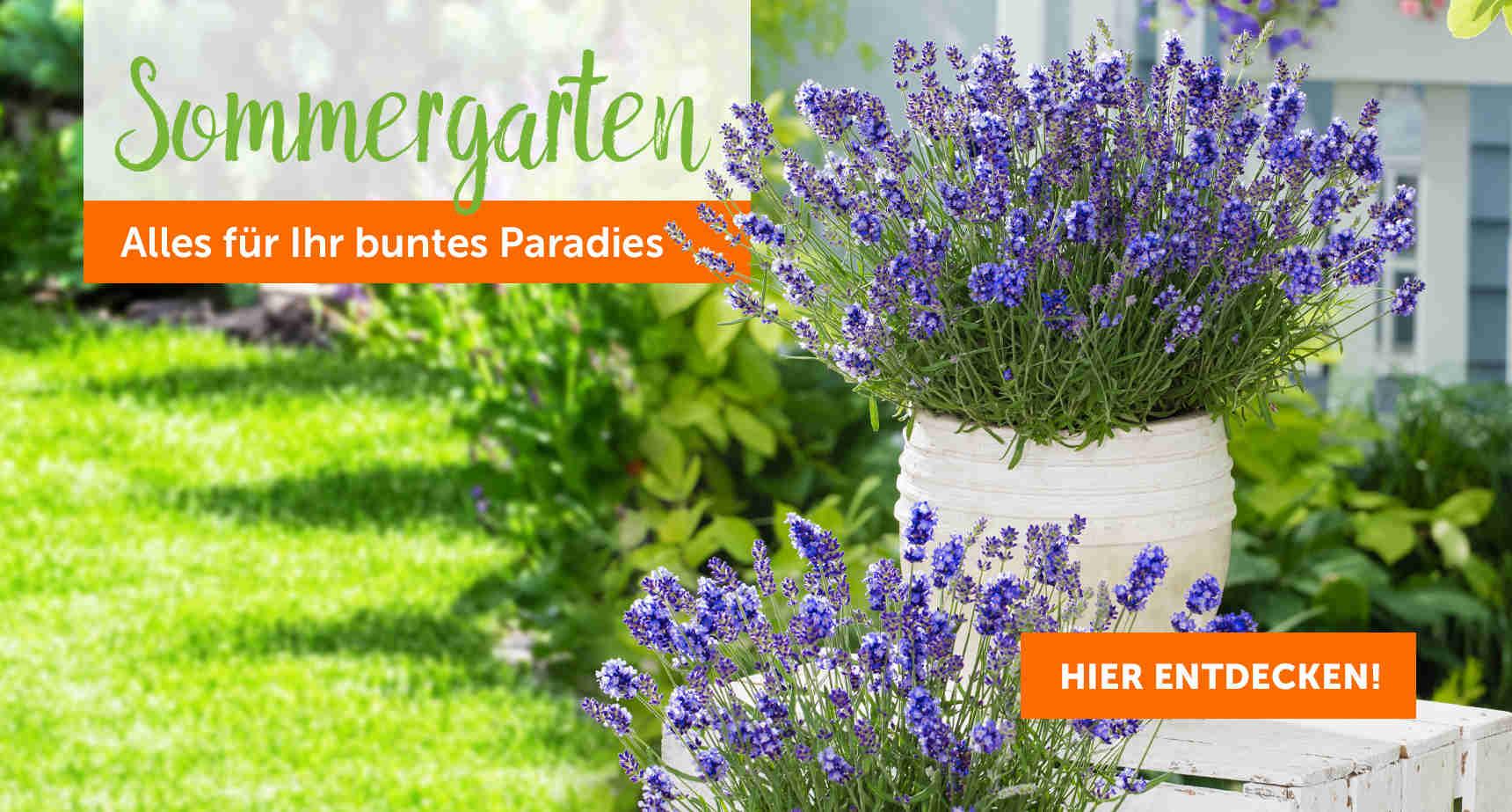 +++ (3) Sommergarten +++ - 3