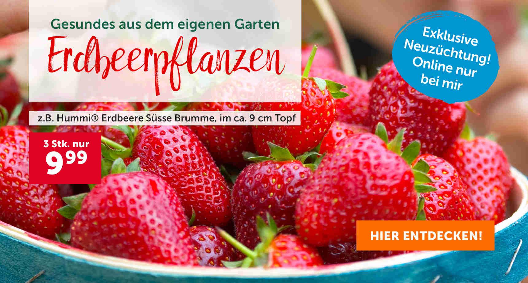 +++ (1) Erdbeeren +++ - 3