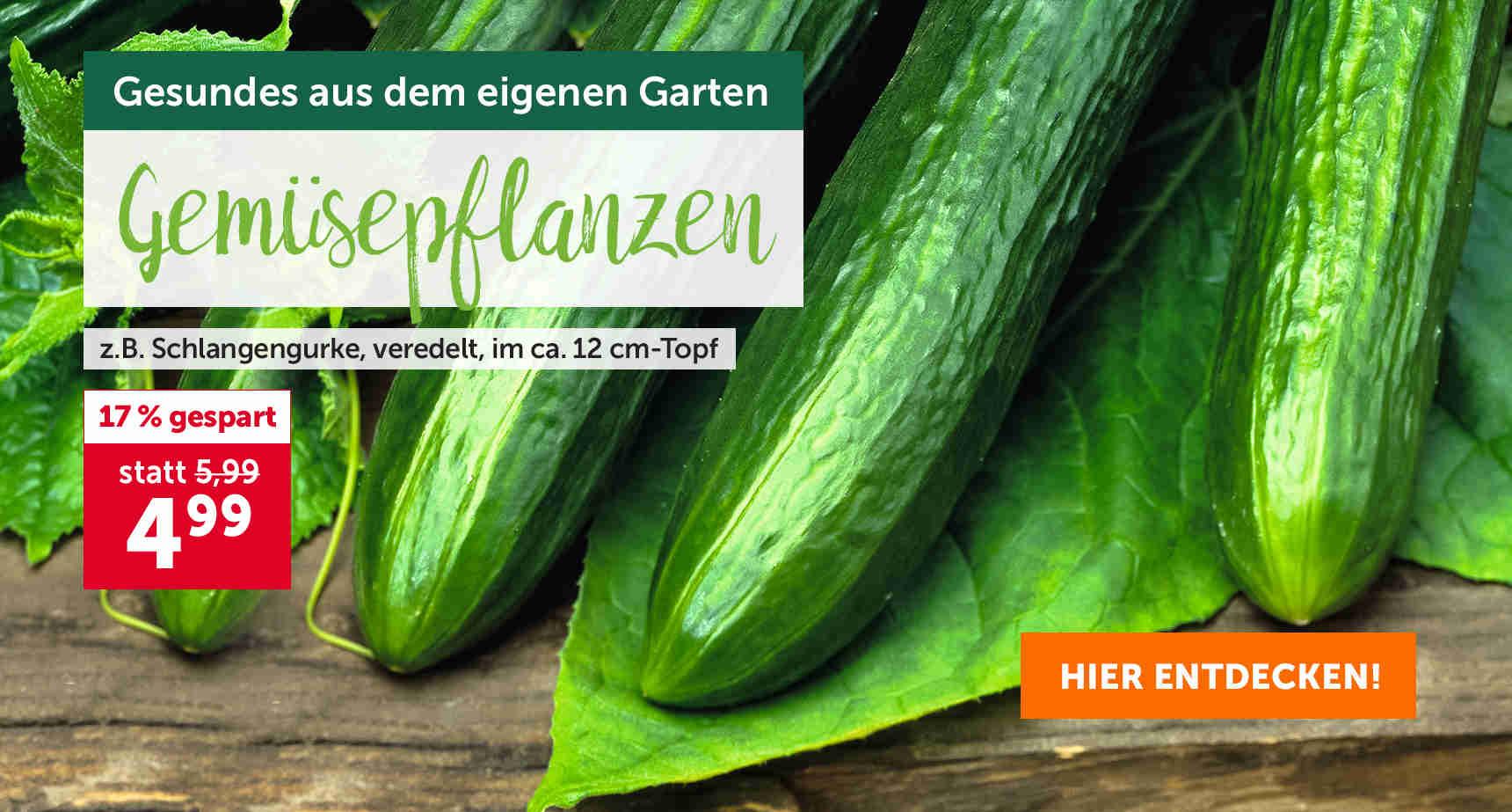 +++ (2) Gemüsepflanzen +++ - 3