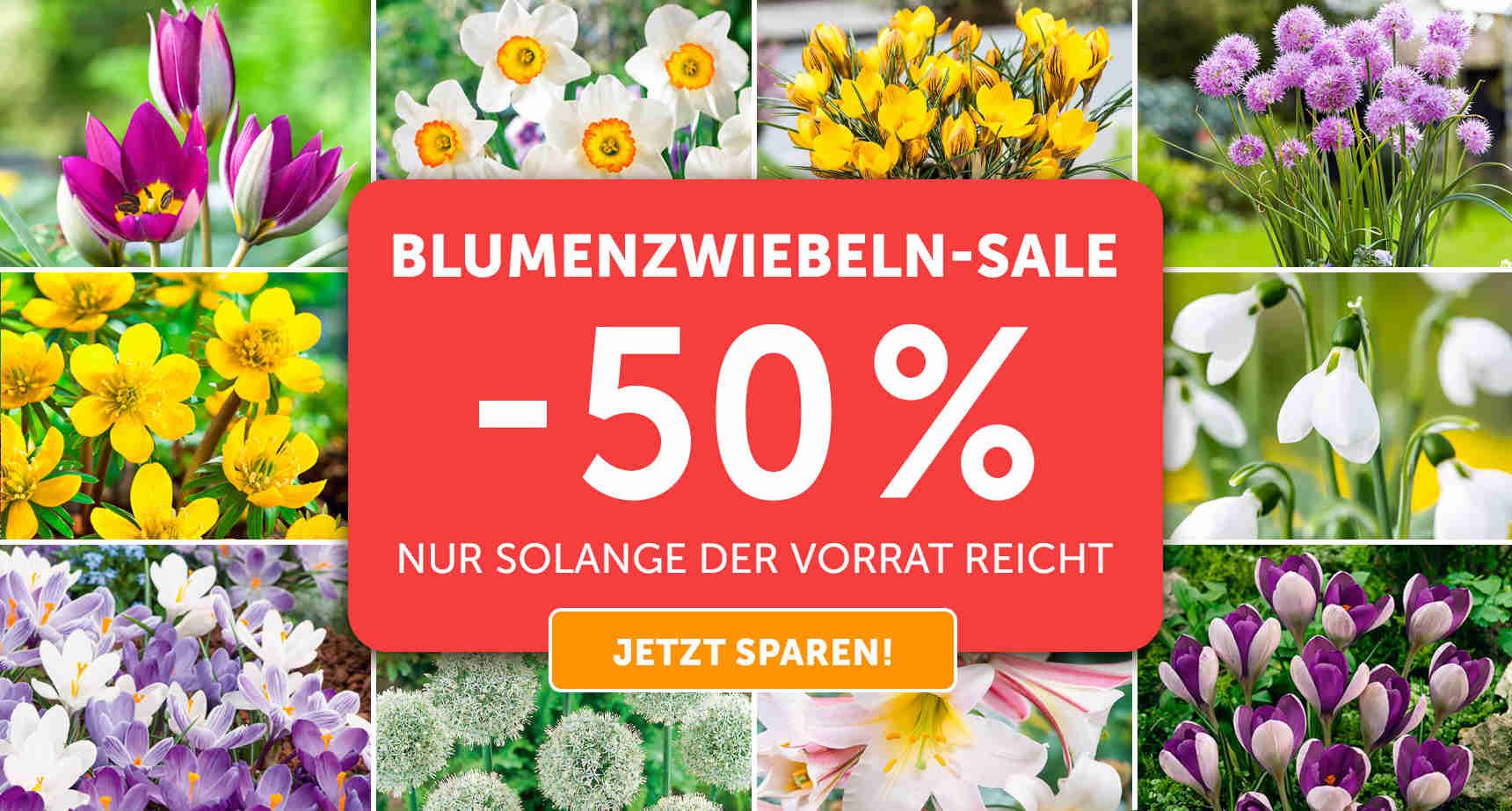+++ (1) Blumenzwiebeln-SALE +++ - 3