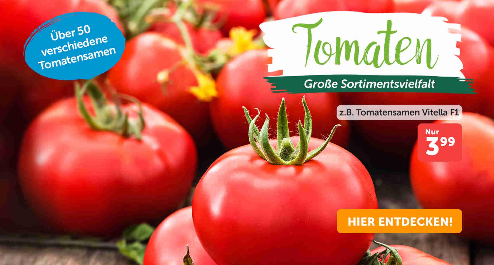 +++ (1) Tomatenvielfalt +++ - 3