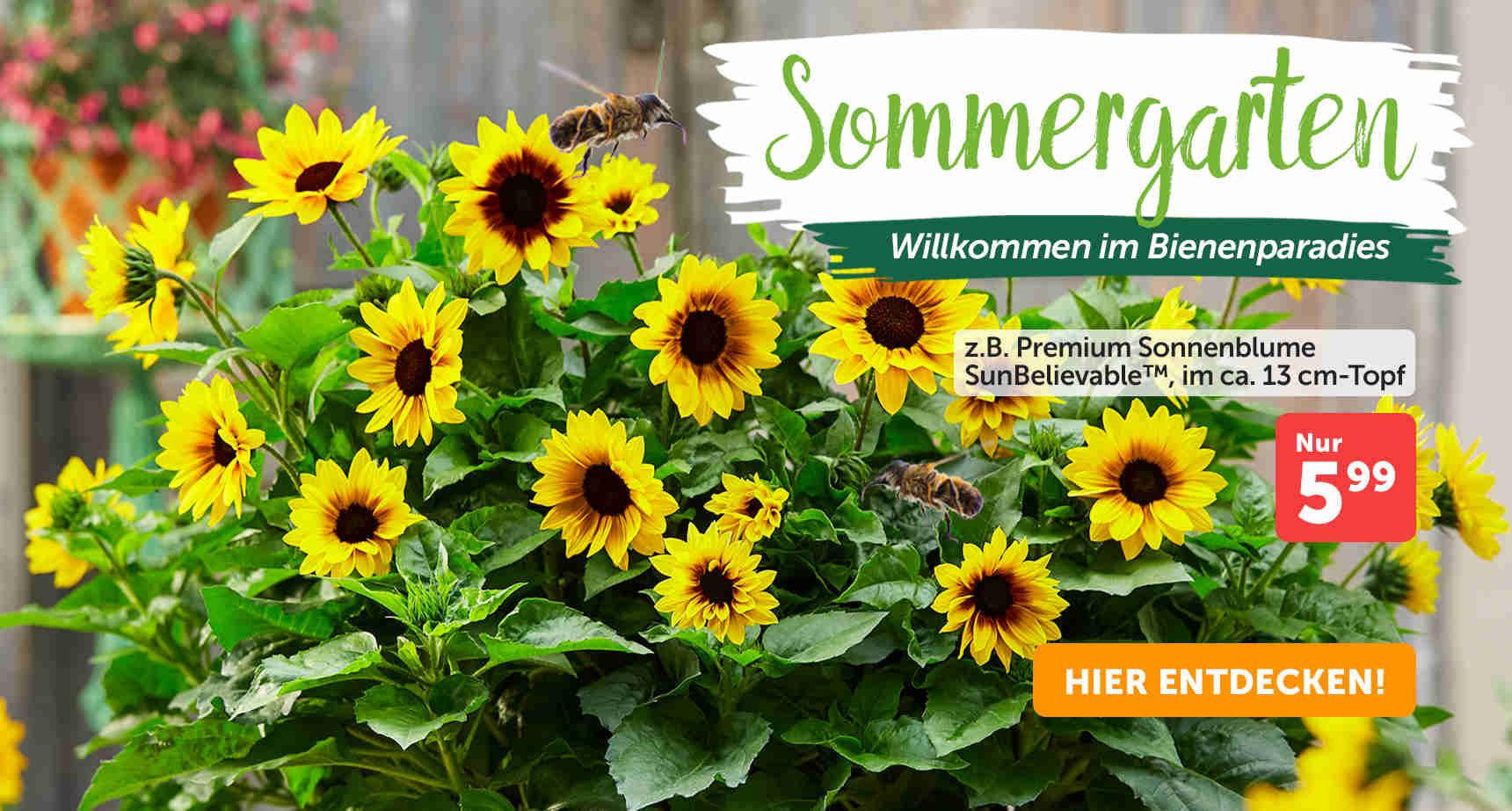 +++ (1) Sommergarten +++ - 3