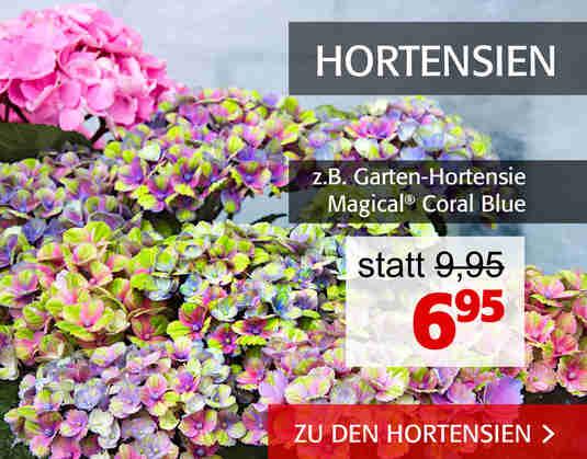 + Hortensien +