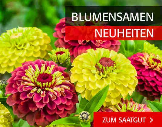 + (2) Blumensamen Neuheiten +