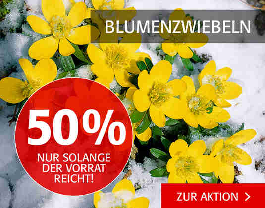 + (3) Blumenzwiebeln +
