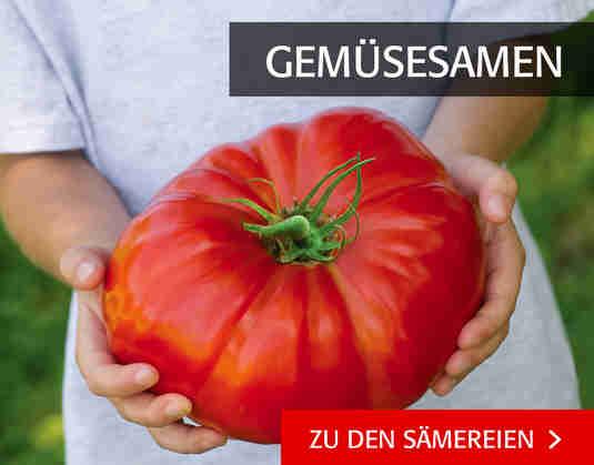 + (3) Gemüsesamen +
