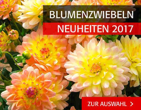 + (4) Neuheiten Blumenzwiebeln +