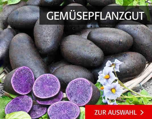 + (4) Gemüsepflanzgut +