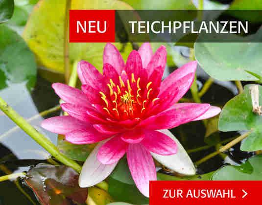 + (2) Teichpflanzen +