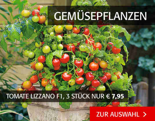 + (3) Gemüsepflanzen +