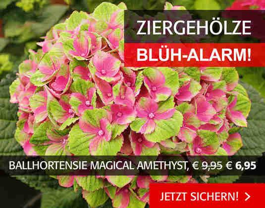 + (2) Ziergehölze Blühalarm +