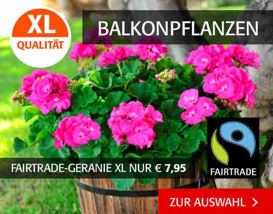 + (3) Balkonpflanzen +