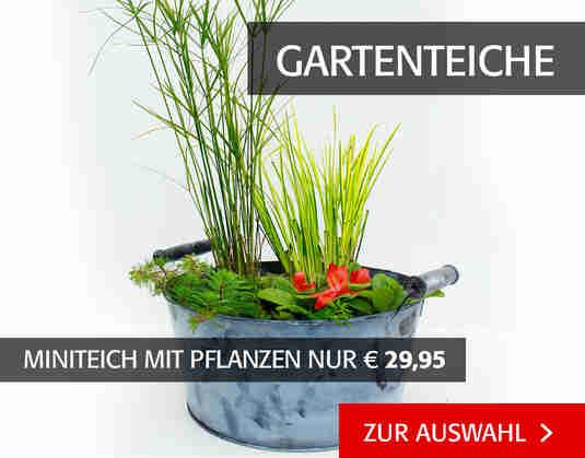 + (3) Gartenteiche +