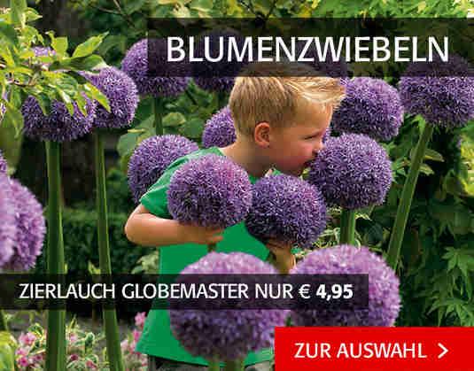 + (4) Blumenzwiebeln +