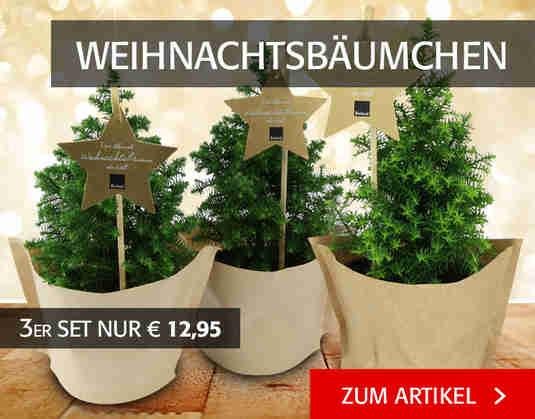 + (3) Weihnachtsbäumchen +