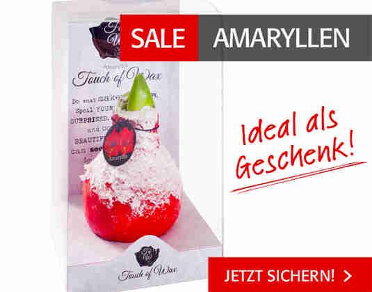 + (4) Amaryllen Sale +