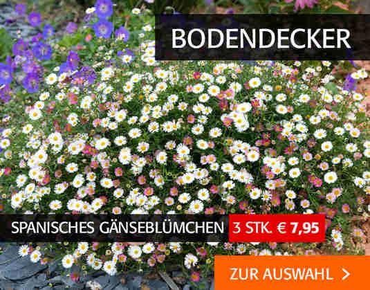 + (1) Bodendecker +