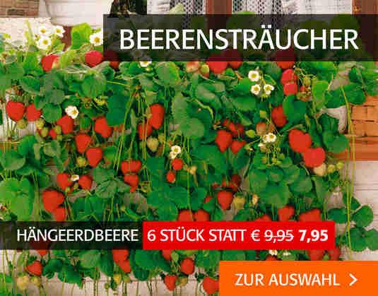 + (2) Beerensträucher +