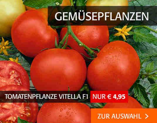 + (1) Gemüsepflanzen +
