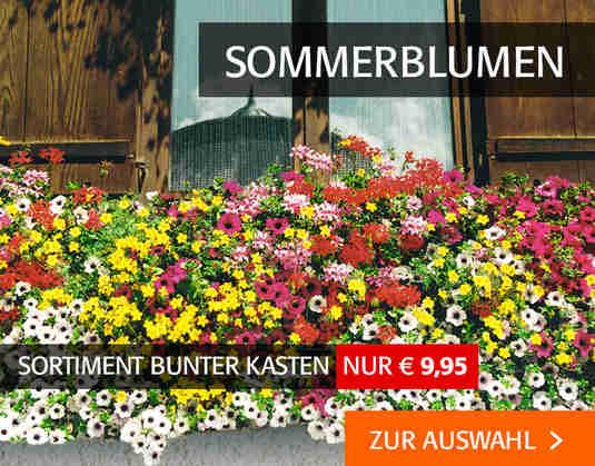 + (3) Sommerblumen +