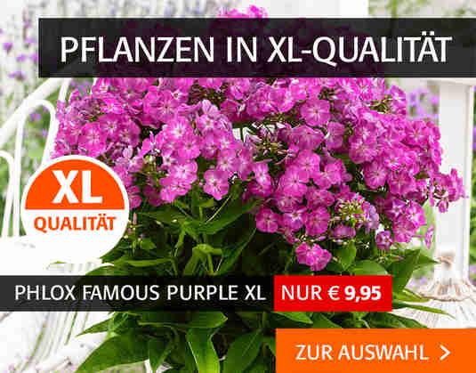 + (2) XL-Pflanzen +