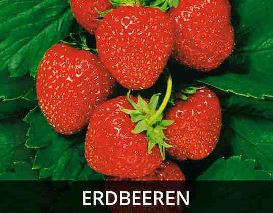 + (3) Erdbeeren +