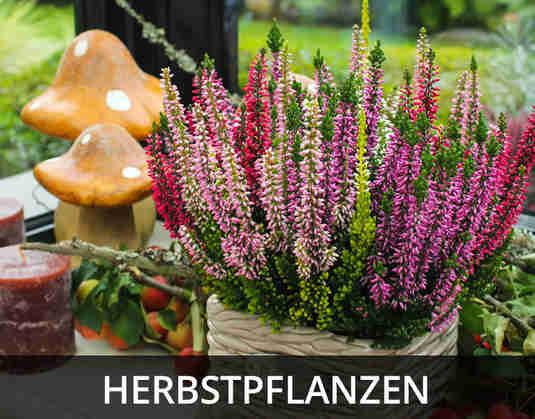+ (3) Herbstpflanzen +