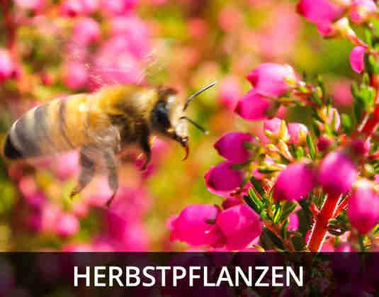 + (4) Herbstpflanzen +