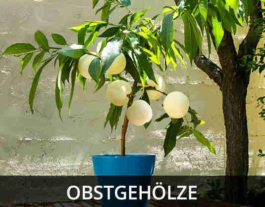 + (2) Obstgehoelze +