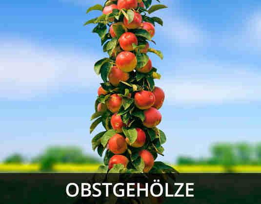 + (3) Obstgehoelze +