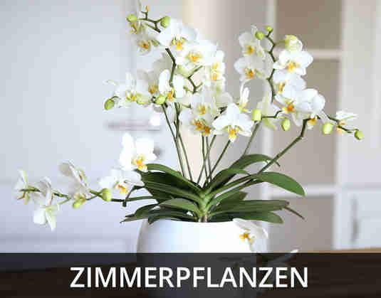 + (2) Zimmerpflanzen +