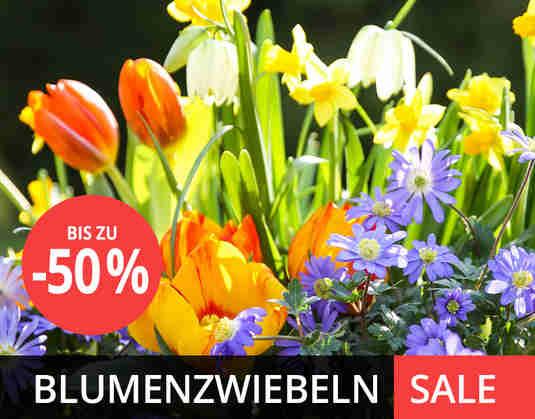 + (1) Blumenzwiebeln Sale +