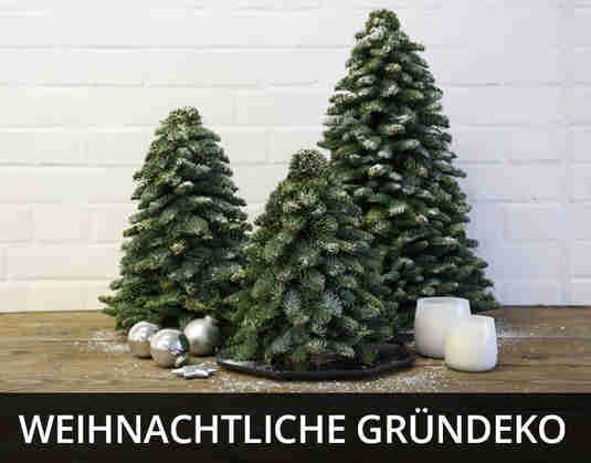 + (4) Weihnachtliche Gründeko +