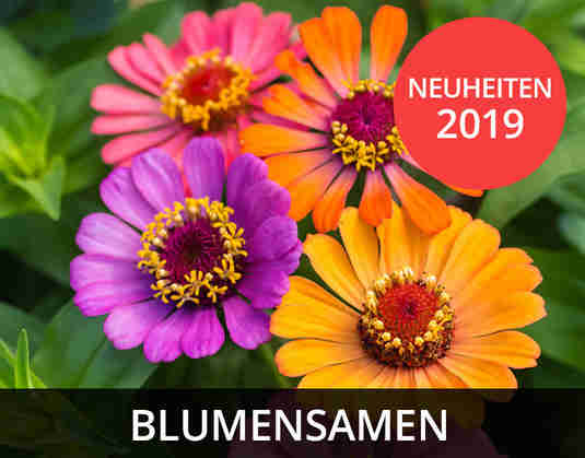 + (4) Blumensamen +