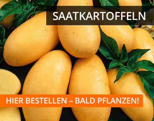 + (3) Saatkartoffeln +