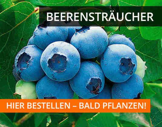 + (1) Beerensträucher +