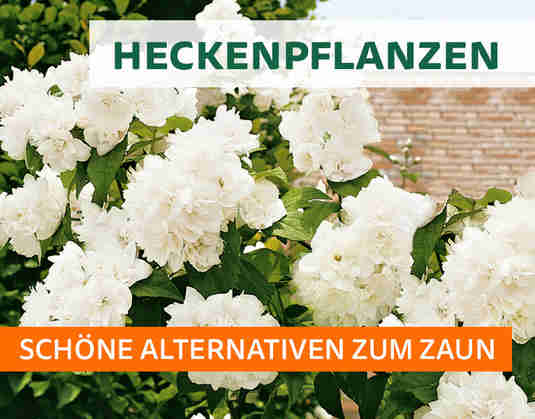 + (2) Heckenpflanzen +