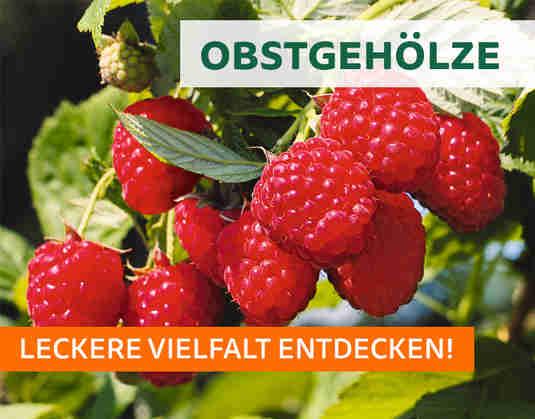 + (1) Obstgehoelze +