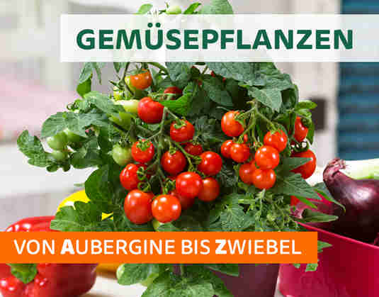 + (2) Gemüsepflanzen +