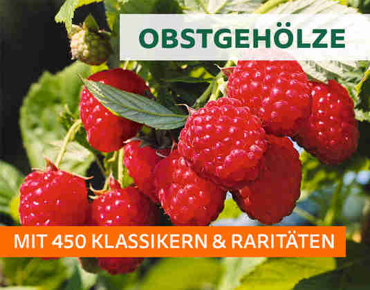 + (1) Obstgehölze +
