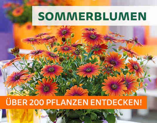 + (1) Sommerblumen +