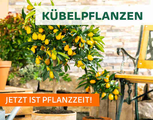 + (1) Kübelpflanzen +
