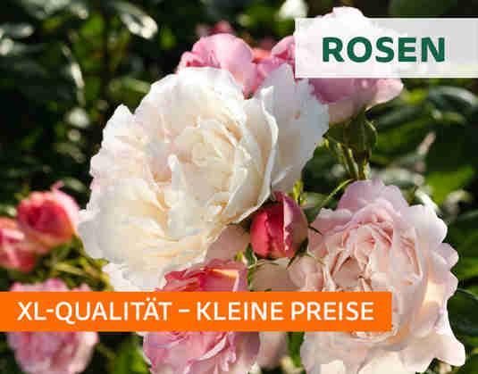 + (1) Rosen +