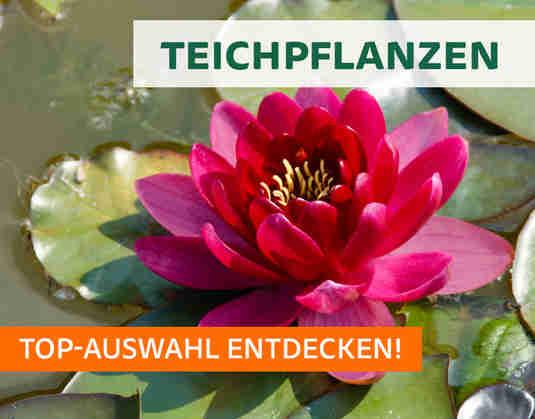 + (3) Teichpflanzen +