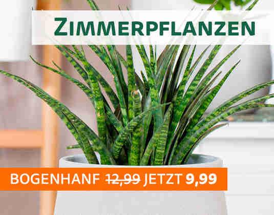 + (3) Zimmerpflanzen +