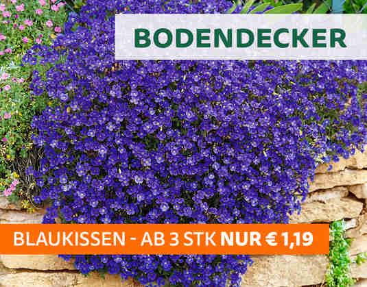 + (3) Bodendecker +