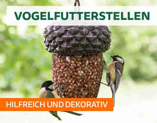 + (3) Vogelfutterstellen +