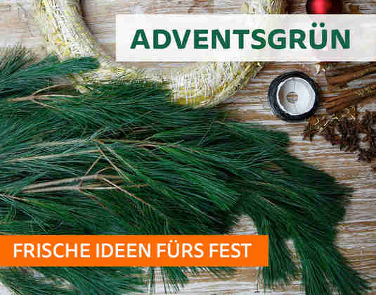 + (1) Adventsgrün +