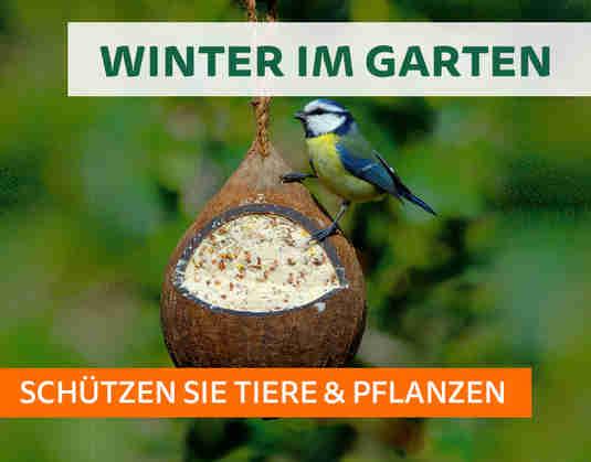 + (3) Winter im Garten +